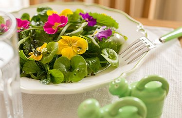 Winter-goes -Spring-Salat