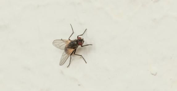 fliegen durch komposthaufen